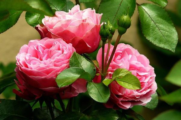 La storia della piccola Gaia: un fiore al posto del fiocco rosa
