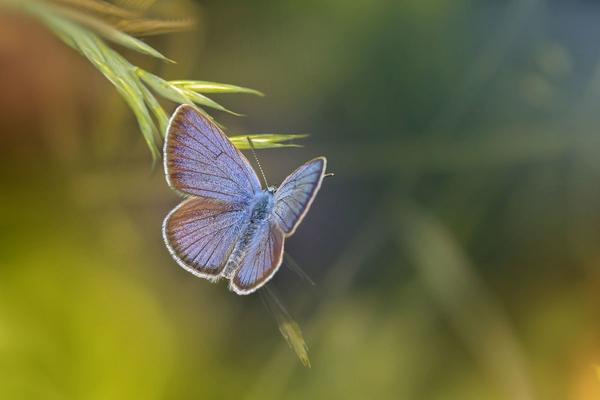 La farfalla sulla roccia