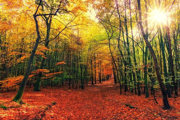 Dopo un grande dolore: ricominciare dal bosco