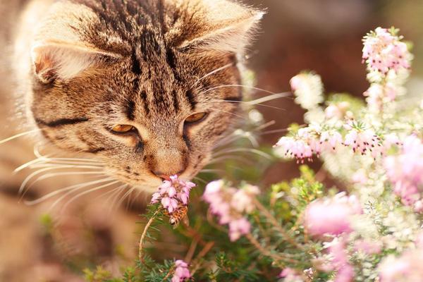 Covid-19, con l'olfatto e il gusto si può perdere anche il desiderio
