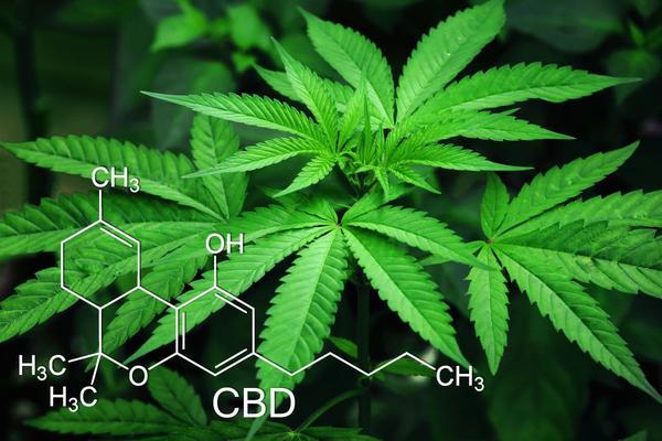 Cannabis: attente a non avvelenare il bimbo in utero
