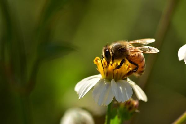 Salviamo le api e (forse) ci salveremo