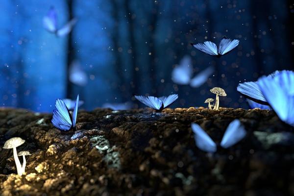 I neuroni, farfalle misteriose dell'anima