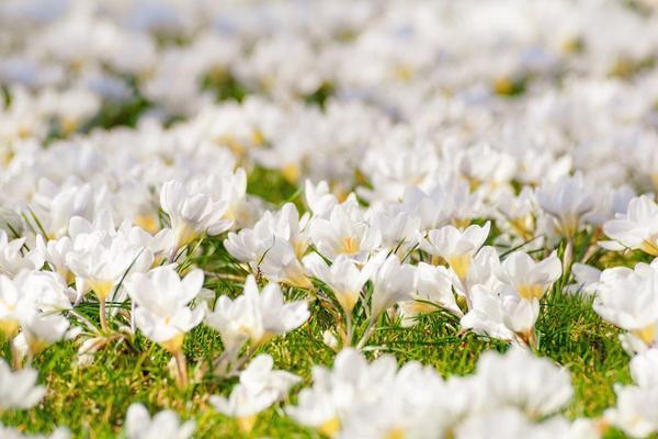 Una nuova primavera per le «principesse»