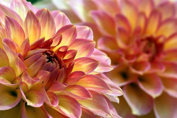 Atrofia vulvovaginale e sindrome genitourinaria della menopausa